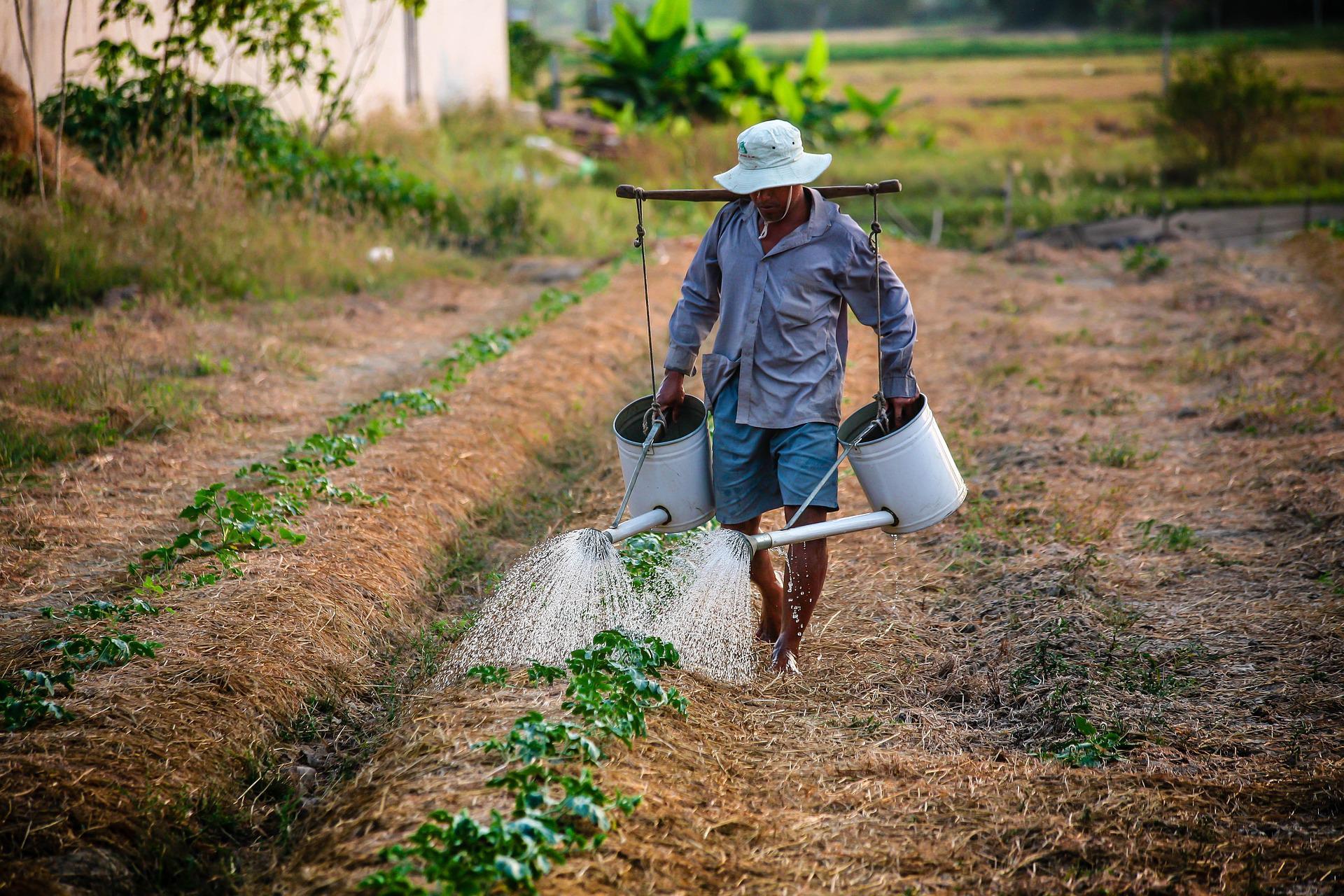 Agricultores já podem fazer consulta on-line do Programa Garantia ...